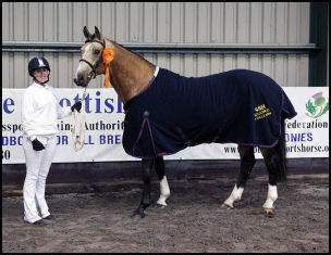 Blacklaw Pelorus Scottish Sports Horse Grading